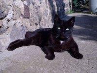 Fényképek 08 (A fekete cicus.jpg