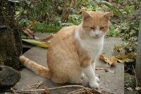 Új vörös macska.jpg
