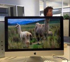 llamas-in-a-field-in-your-office-1469324366.jpg