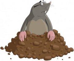 depositphotos_7614958-stock-illustration-mole.jpg