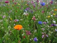 flower-meadow-52086_640.jpg