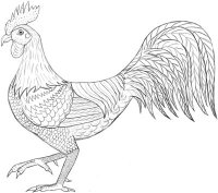 how-to-draw-a-rooster-0000.jpg