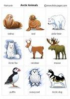Arctic Animals.jpg