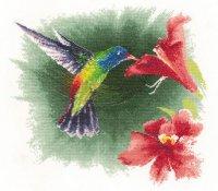 Hummingbird in Flight.jpg