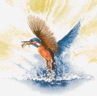 Kingfisher in Flight.jpg