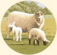 Wooly Jumpers.jpg