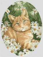Ginger_Cat.jpg
