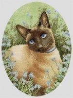 Siamese_Cat.jpg