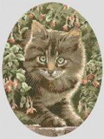 Tabby_Kitten.jpg