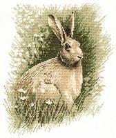 Brown Hare.jpg