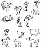 állatok és kicsinyeiket.JPG
