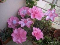 virág24.jpg