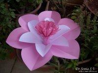 virág25.jpg