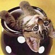 macskusz12