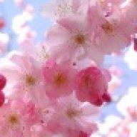 Cseresznyevirág_