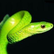 Nagykígyó11