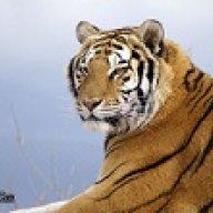 tigris4