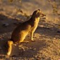 mongoose7