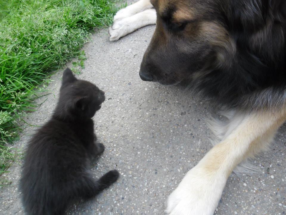 Kutya-macska-egyebek