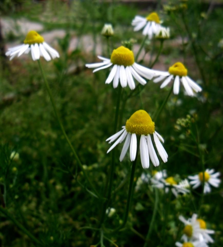 Virágok a kertemből