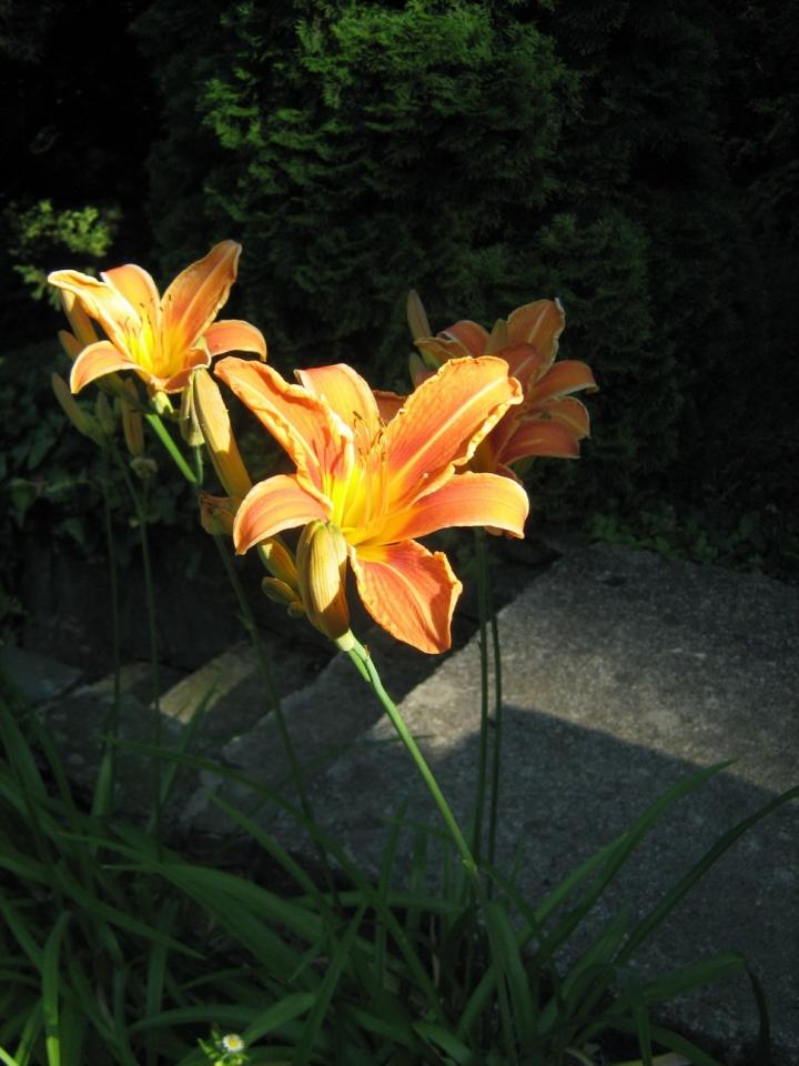Virágaink