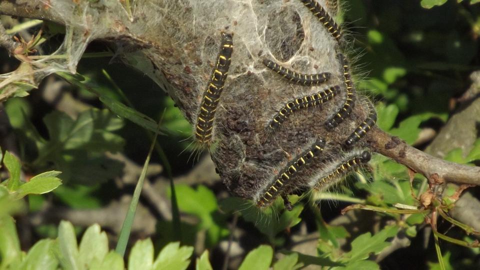 Tájak madarak, rovarok, emlősök, hüllők